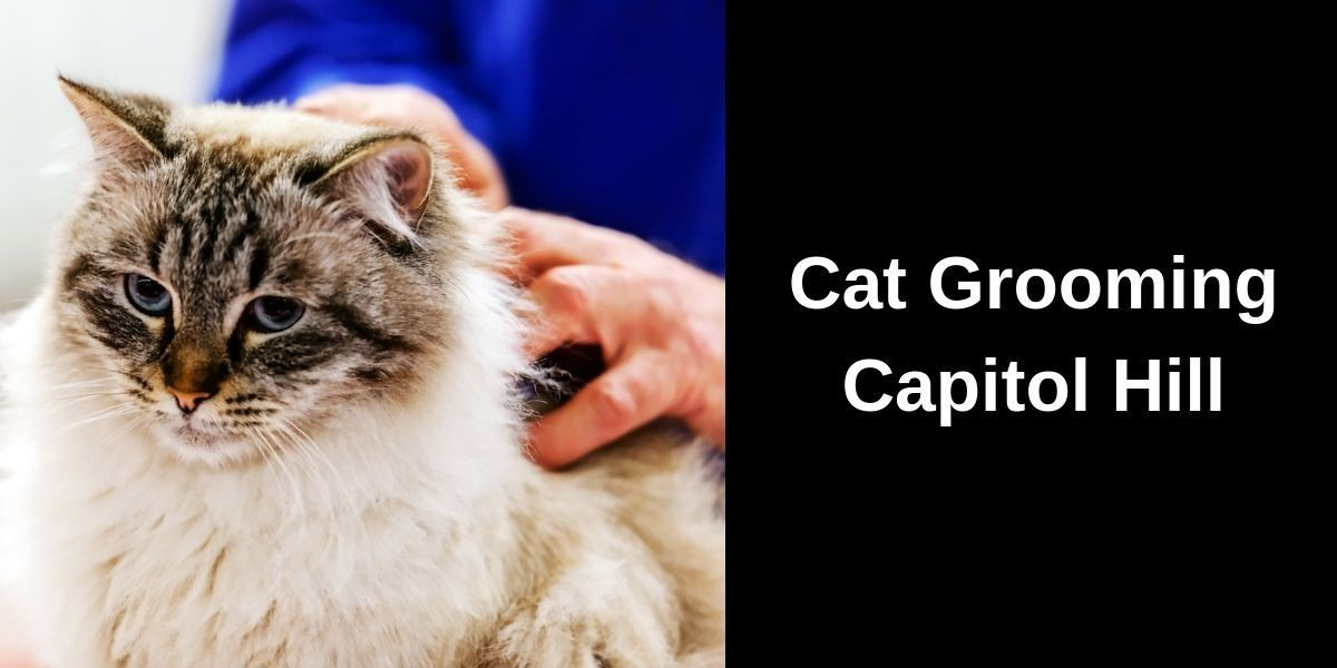 Cat-Grooming-Capitol-Hill