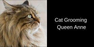 Cat-Grooming-Queen-Anne