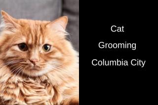 Cat-Grooming-Columbia-Cit_20191012-042358_1
