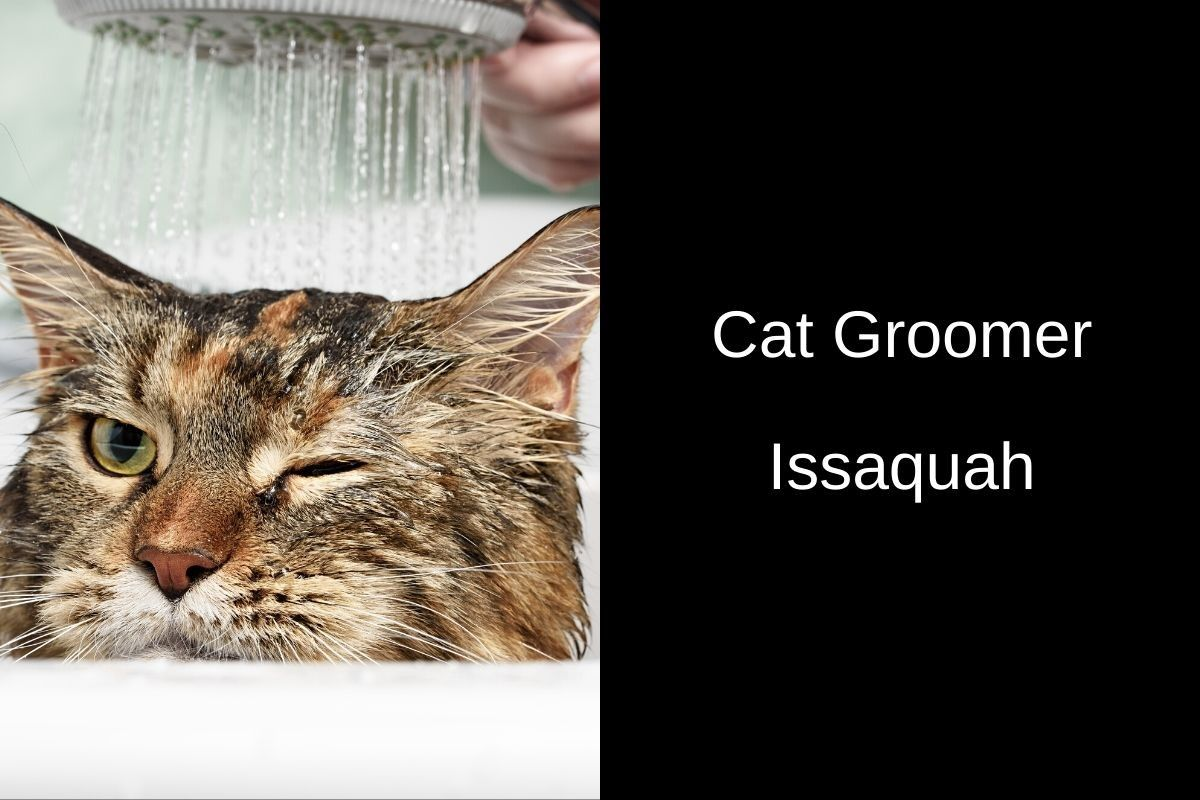 Cat-Groomer-Issaquah