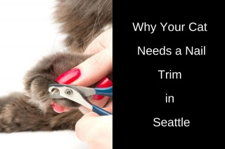 Why-Your-Cat-Needs-a-Nail-Trim-in-Seattle