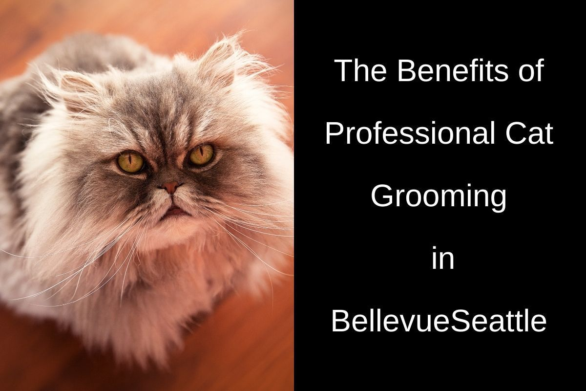 The-Benefits-of-Professional-Cat-Grooming-in-Bellevue