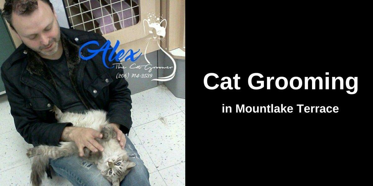 Cat-Groomer-in-Mountlake-Terrace-1