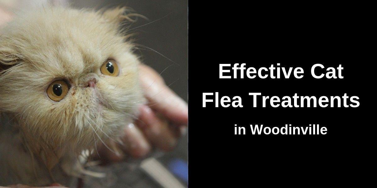 Effective-Cat-Flea-Treatments-in-Woodinville