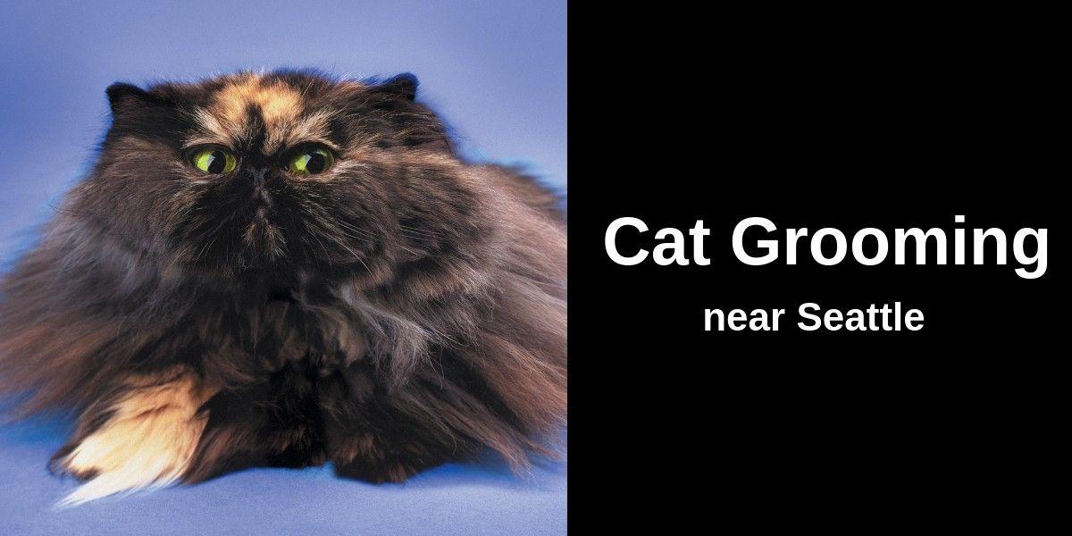 Cat-Grooming-near-Seattle