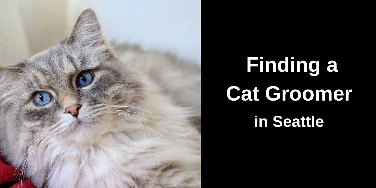 Finding-a-Cat-Groomer-in-Seattle